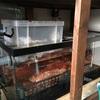 オーバーフロー水槽のメリットとデメリット