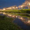 草場川で夜桜とリフレクションを撮ってきた!