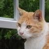 5月14日 江東区塩浜から上野不忍池まで猫さま歩き とその情景