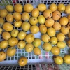 【レシピ】ビワの種で杏仁豆腐を作ろう(枇杷仁豆腐)