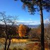 蕁麻疹とニキビの漢方相談…銀杏の木と月山