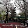 上野動物園にお花見に行ってきました♪