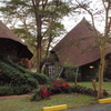 ケニアひとり旅⑥【野生のキリンが眠る素敵なナイバシャソパロッジに宿泊】
