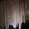 ジェノランケーブ鍾乳洞に行ってきました。シドニー近郊観光スポットです。