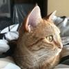 猫は横顔が一番盛れるのかもしれない【インスタ映え?笑】