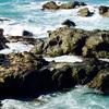 ニュージーランドの南島をバスでブレナムからクイーンズタウンまで旅したハナシ〜カイコウラ編vol.➀〜