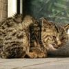 ネコ、Darsana、引っ越し、レベル15