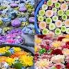 花手水と日本最大級の円墳から眺める桜ツアー【カラフルな花といちご狩り】