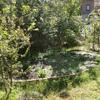 庭花壇 タネ蒔き
