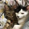 【猫画像】うちにいる可愛い猫たちを紹介したい