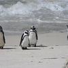 南アフリカ・ケープタウンの魅力③(BazBus観光編)