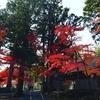 人工知能の世界に向けて、画家として日本を世界に広げたい!「和の國開國」