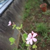 地元の七夕祭りと花の写真