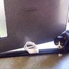 5日ぶりに現れた近所の野良猫「ちびゴン」