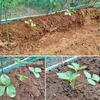 畑の整理とポット植え込み