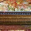 岐阜市にある大智寺の紅葉。