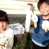 【参加レポート】「お野菜を収穫して、マルシェで販売体験!+流しそうめんのコースを竹から作る」
