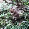 生後2か月の子猫
