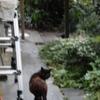 黒い  猫
