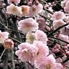「立春」は英語で何と?春節との違いは?旧正月とは!?