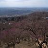 筑波山の梅林