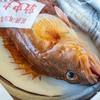 2019年8月3日 小浜漁港 お魚情報