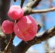 フォトブログ そろそろ梅の花が見頃です。大阪近辺のおすすめの撮影スポット。