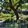今日の庭とハチドリの雛