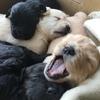 仔犬たちが生まれて、ひと月経ちました