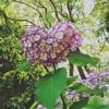紫陽花と竹と鎌倉と父の日