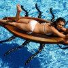 アマゾンに生息する巨大ゴキブリと泳ぐ夏