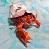 折り紙1枚で貝殻も!神谷哲史作品集2の「ヤドカリ」にチャレンジ
