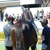 JRA 「霜降り明星」「元騎手藤田伸二」らが教える競馬の新しい楽しみ方!? 予想だけじゃない競馬テーマのYouTuberが熱い