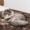 【介護】介護用ベッド~パイプベッドでは生活が難しいこともあります~
