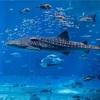 名古屋港水族館の営業時間、休館日、料金割引情報を教えるよ!