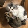 【猫ブログ】猫ちゃんは何故爪とぎするの?