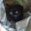 今日の黒猫モモ&白黒猫ナナの動画ー954