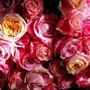 tamaki-flower~バラ色の人生は、自分自身の目的意識で創りあげていくもの