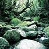 屋久島、白谷雲水峡