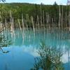北海道美瑛町白金に青い湖の青い池は見た目より写真のほうがきれいだった