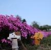 遠軽町 太陽の丘に広がる芝桜公園