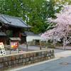 京都桜シリーズ 随心院