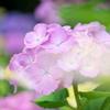 今日の撮りPhoto - 花 LEICA DG MACRO-ELMARIT 45mm/F2.8  -