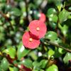 まん丸小さなかわいい花たち