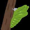 【虫嫌いな人は閲覧ダメ】アゲハチョウの幼虫が緑色のちっちゃい王蟲で、カッコ良くなったこと