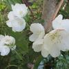 初夏の花木と実