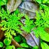 🌿 Plants Planet 🌿