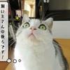 猫雑記 ~未確認飛行物体~