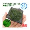 (水草)巻きたて マナウス産ウィローモス 輝板石 Sサイズ(無農薬)(3個)