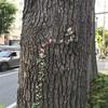【向上心】フリーランスの木